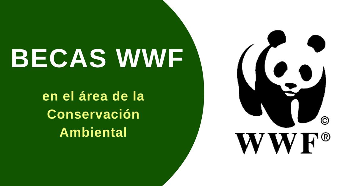 Becas para estudiar programas cortos de conservación del medio ambiente